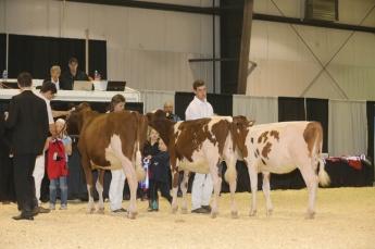 westerner championship dairy showcase